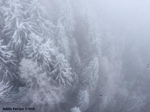 ceata Sinaia