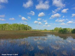 Everglades1
